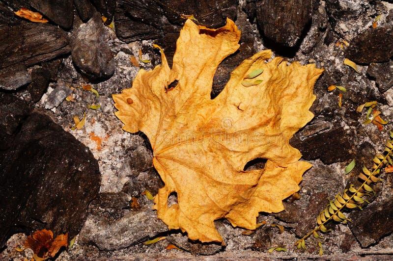 Желтый лист стоковые фото