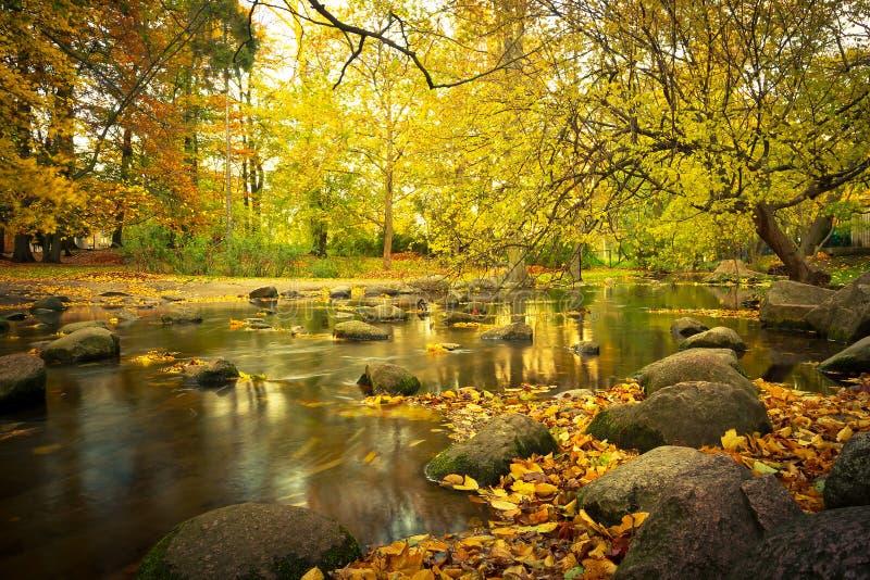 Желтый пейзаж парка в осени Стоковые Изображения RF