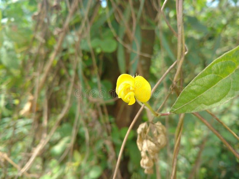 Желтый цветок в всходе парка передвижном стоковая фотография