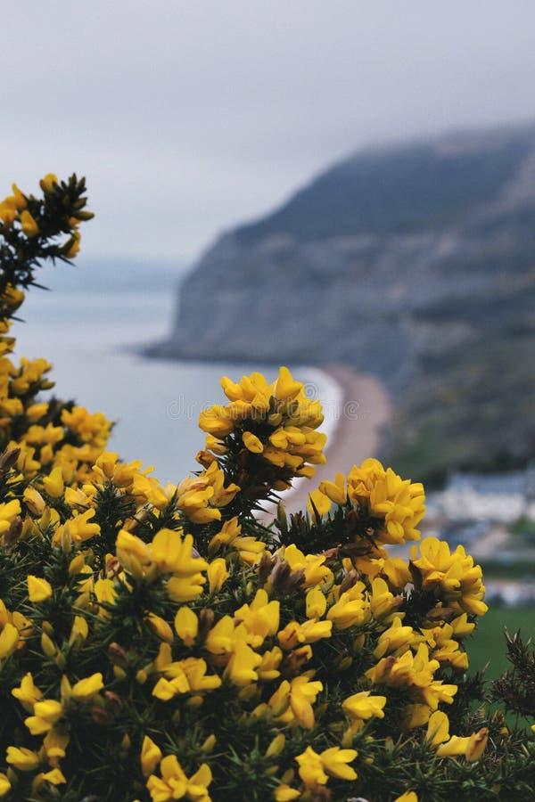 Желтый цветок с видом на море скалы стоковое фото