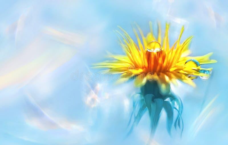 Желтый цветок с падениями воды на лепестках Естественное изображение весны лета Голографическая абстрактная предпосылка стоковое изображение rf