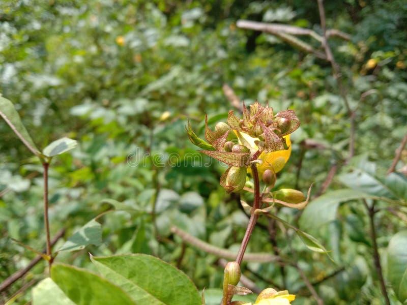 Желтый цветок с семенами стоковое фото rf