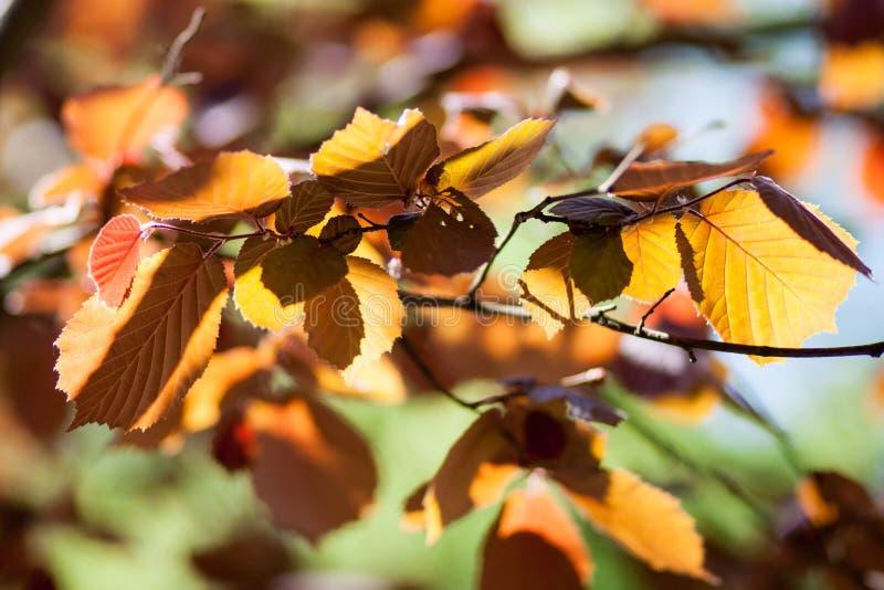 Желтый цвет, апельсин, зеленые листья осени на запачканной предпосылке стоковое изображение rf