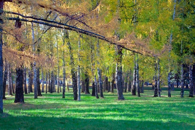 желтый цвет вала неба голубого пасмурного ландшафта поля падения сиротливый Место осени Урбанский парк стоковая фотография