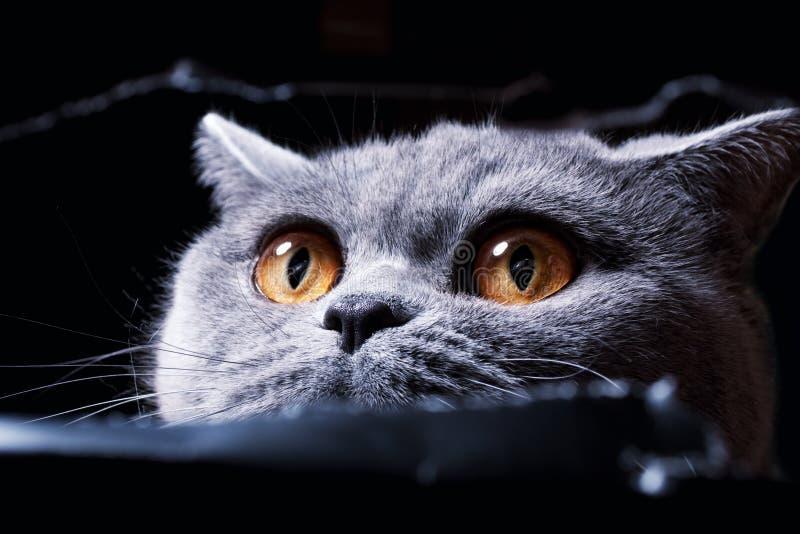 желтый цвет вне s глаза кота отверстия шпионя стоковое изображение rf