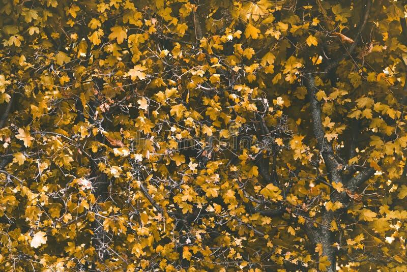 Желтый цвет выходит куст ветвей ландшафта осени стоковые изображения rf