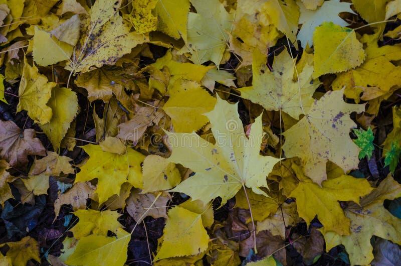 Желтый цвет выходит на том основании стоковое изображение