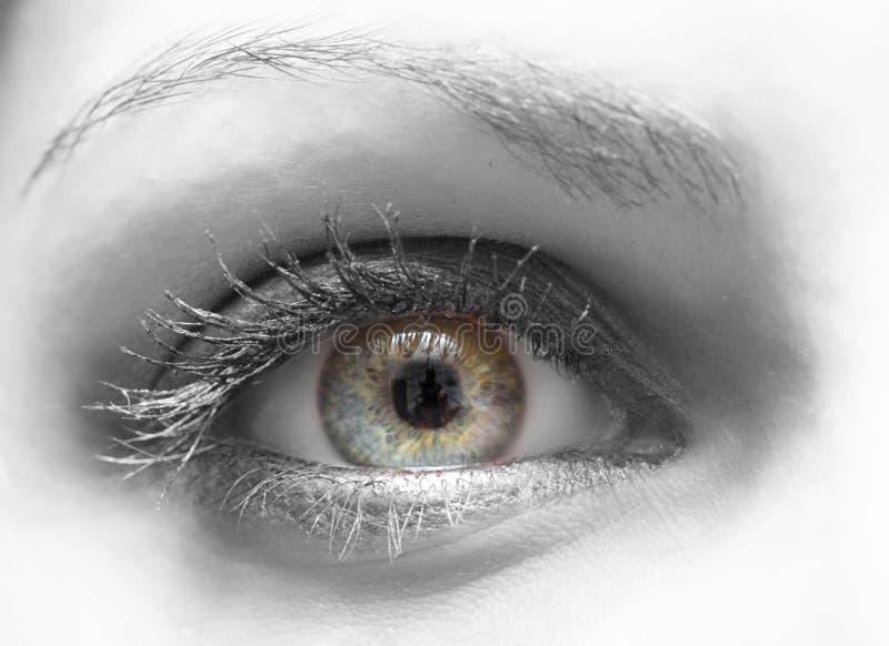 желтый цвет голубого глаза стоковые изображения