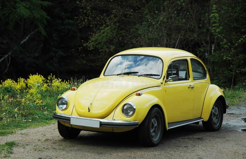 желтый цвет жука стоковое фото