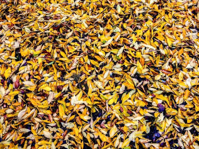Желтый цвет листьев стоковая фотография