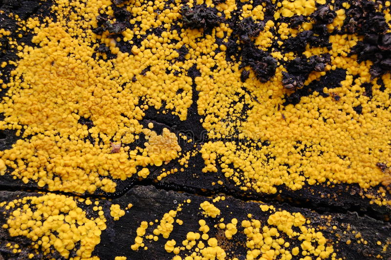 желтый цвет мха предпосылки стоковое изображение rf