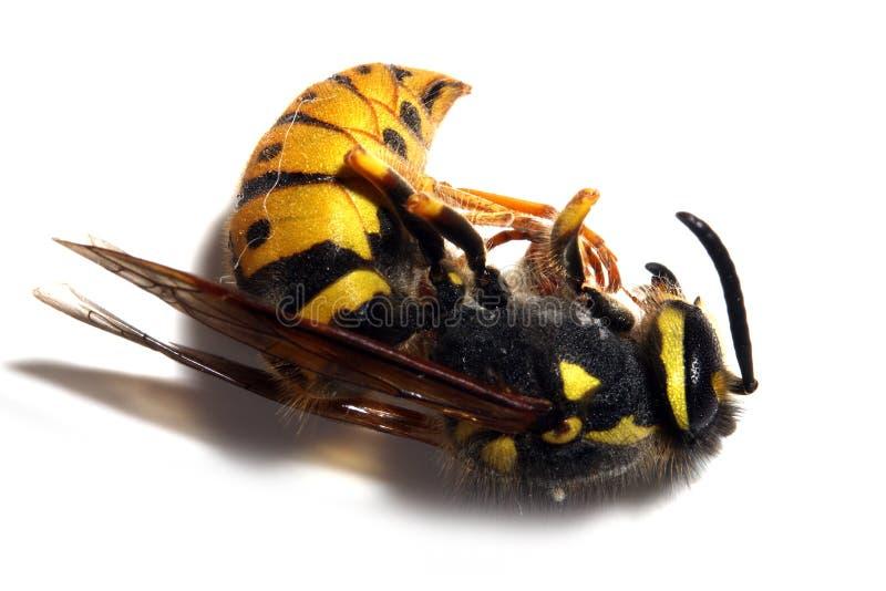 желтый цвет оси куртки стоковые изображения