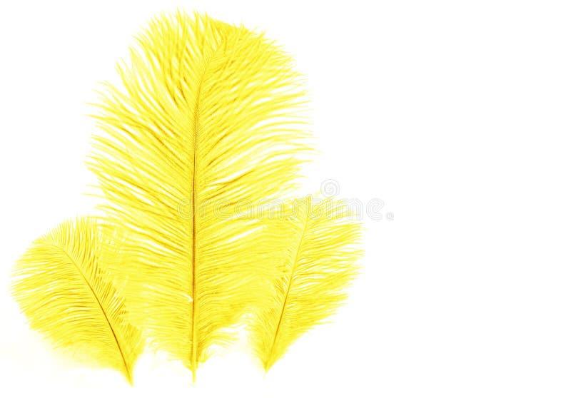 желтый цвет пера иллюстрация штока