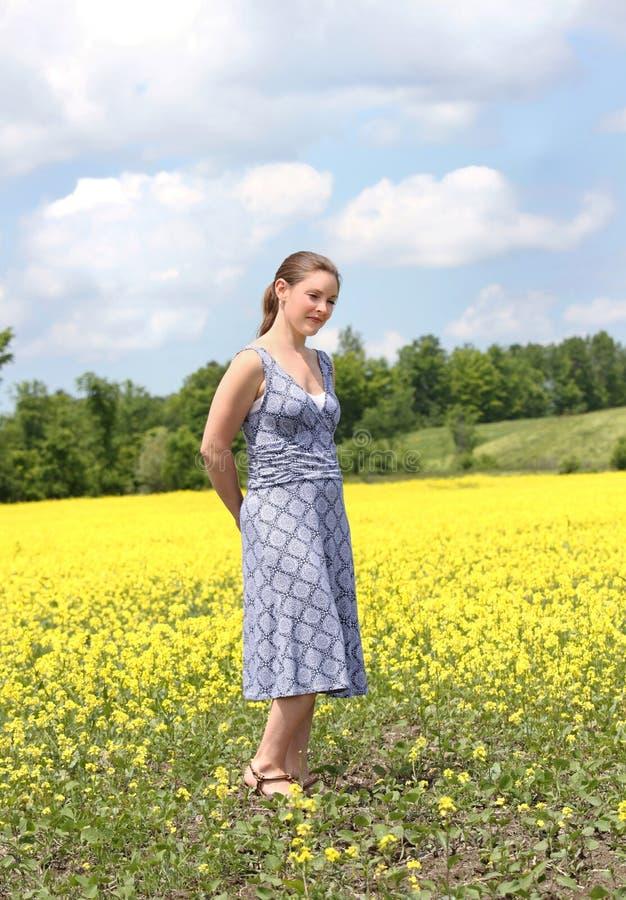 желтый цвет поля стоковые фото