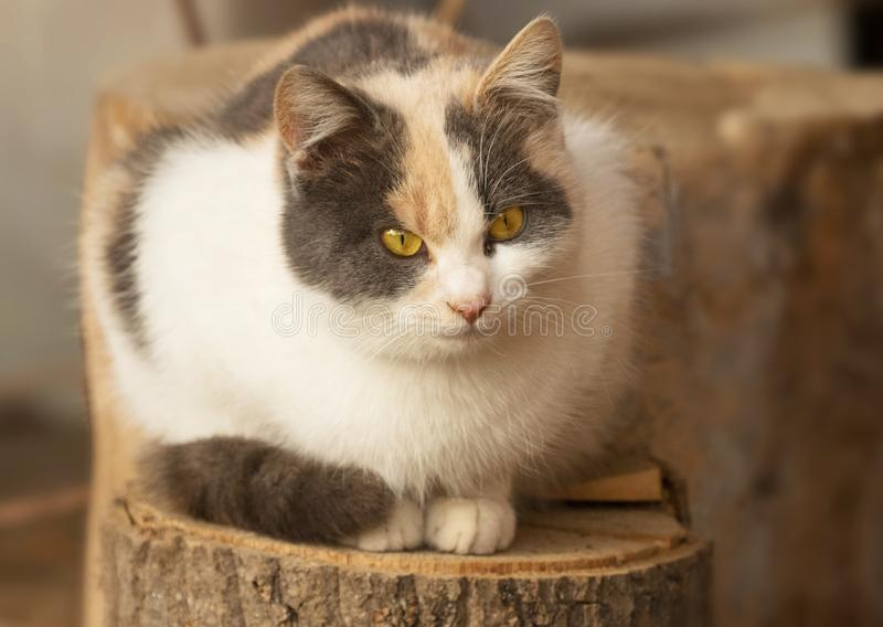 желтый цвет портрета глаз кота Желтый конец кота глаз вверх стоковое изображение