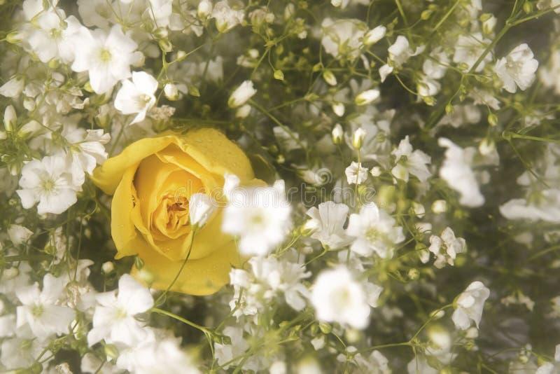 желтый цвет розы букета стоковая фотография