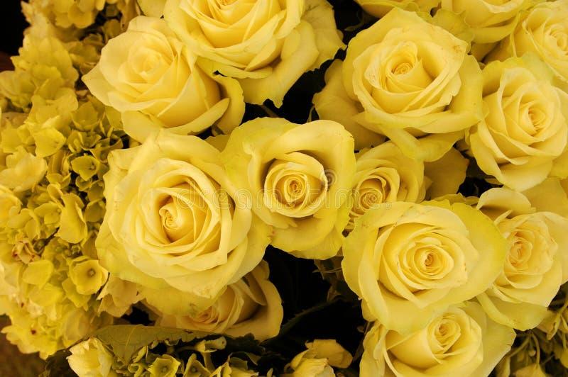 желтый цвет роз букета стоковые изображения rf
