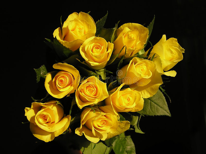 желтый цвет роз стоковая фотография