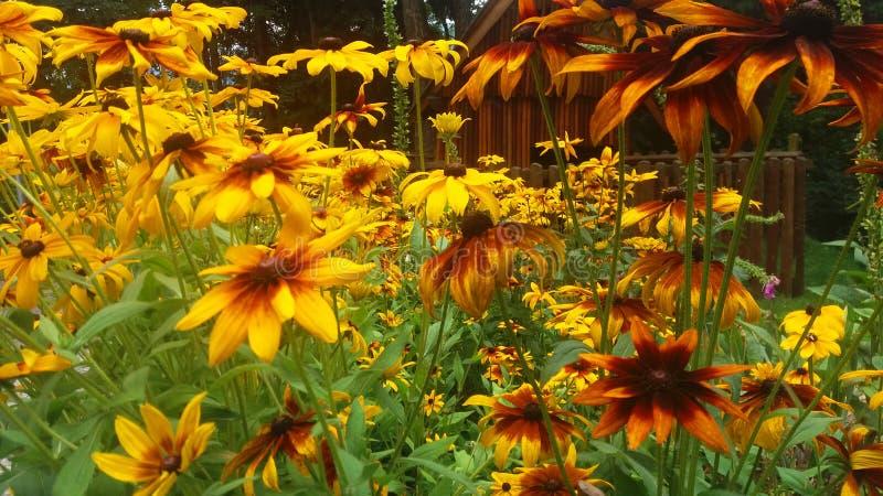 желтый цвет серии цветков стоковое изображение rf