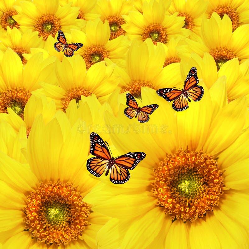желтый цвет солнцецветов стоковые изображения