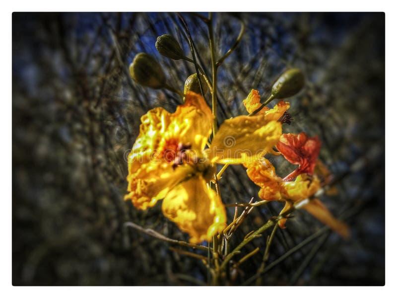 Желтый цвет стоит самостоятельно стоковые изображения