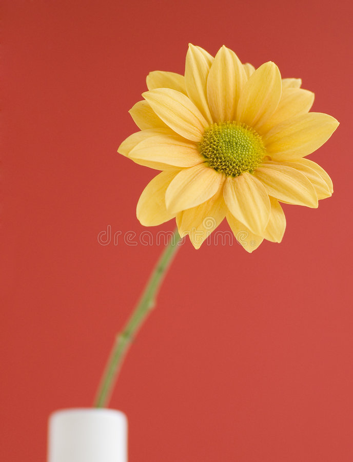 желтый цвет цветка одиночный стоковые фотографии rf