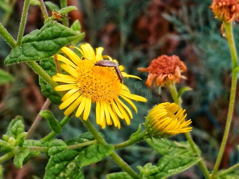 желтый цвет цветка одичалый стоковые изображения
