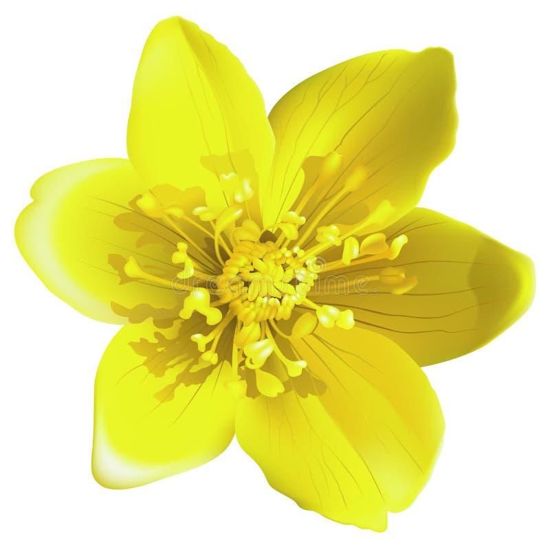 желтый цвет цветка бесплатная иллюстрация