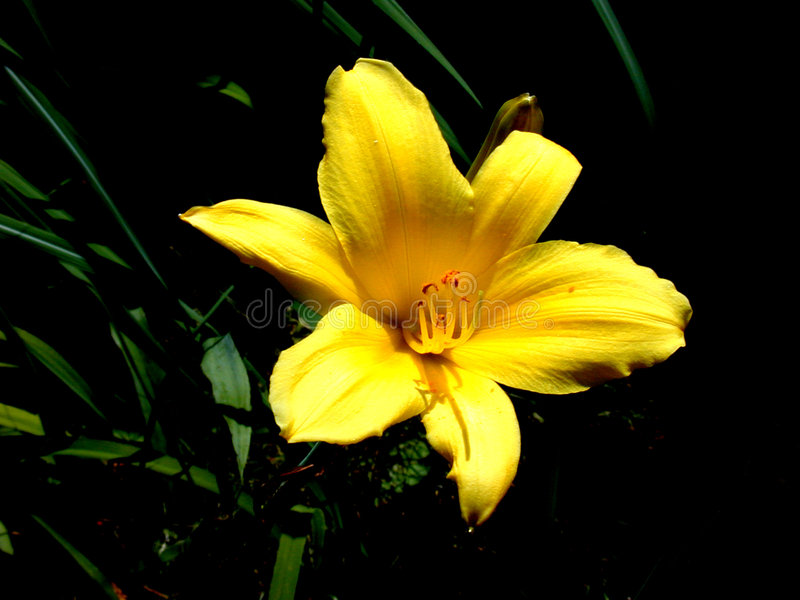 желтый цвет цветка Стоковые Фотографии RF