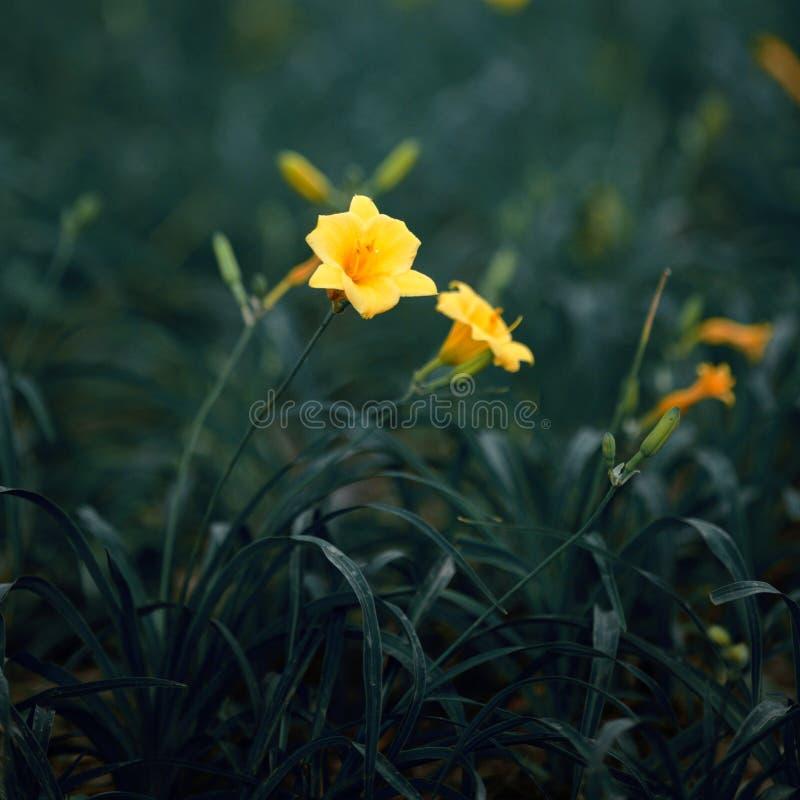 желтый цвет цветка стоковая фотография rf