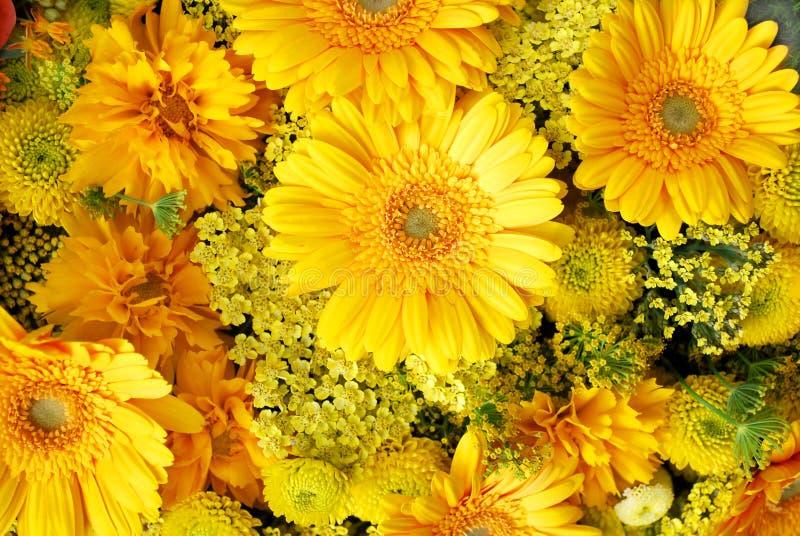 желтый цвет цветков стоковое фото rf