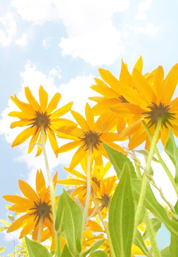 желтый цвет цветков бесплатная иллюстрация