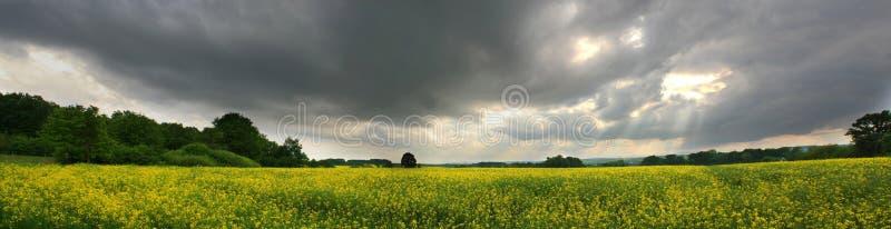 желтый цвет шторма поля стоковые фотографии rf