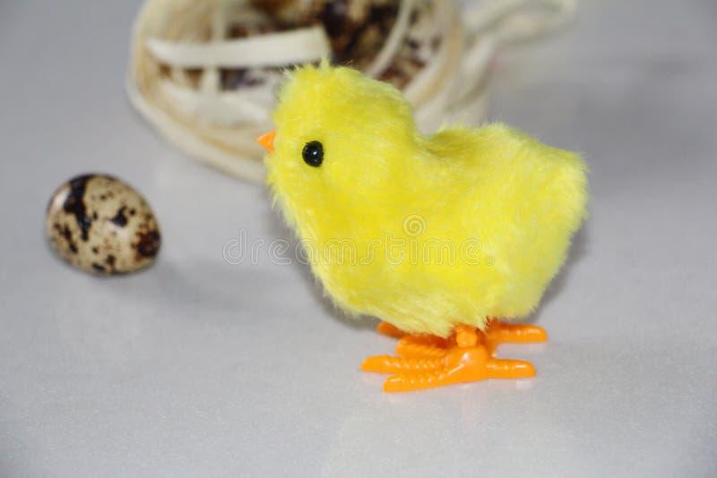 Желтый цыпленок около гнезда в гнезде яйца триперсток стоковая фотография