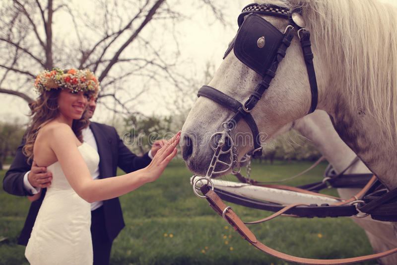 Жених и невеста играя с белой лошадью стоковая фотография rf
