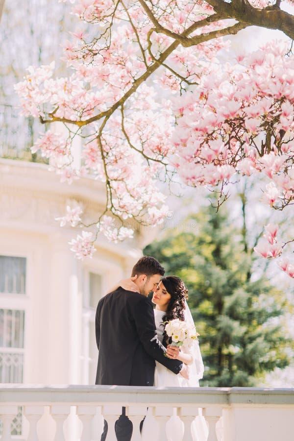 Жених и невеста новобрачных целуя под blossoming деревом магнолии Винтажная вилла на предпосылке стоковые изображения rf
