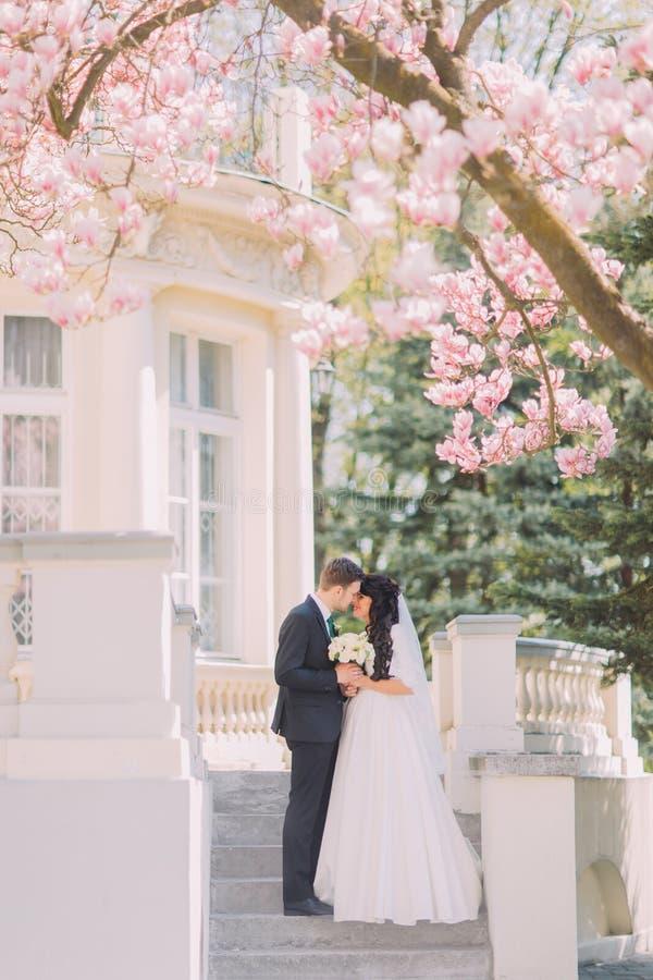 Жених и невеста целуя на лестницах под blossoming деревом магнолии Винтажное здание на предпосылке стоковая фотография