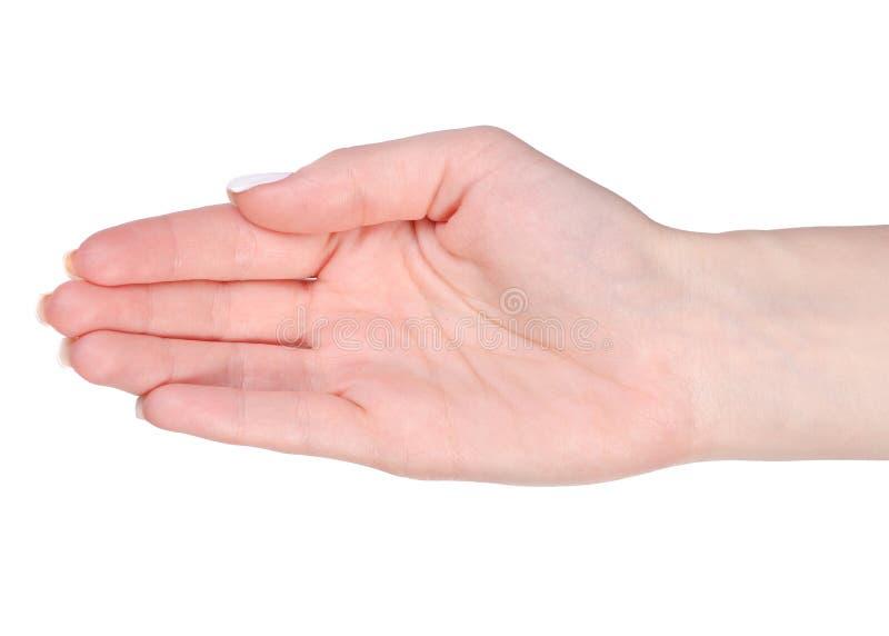 женская ладонь руки стоковые изображения