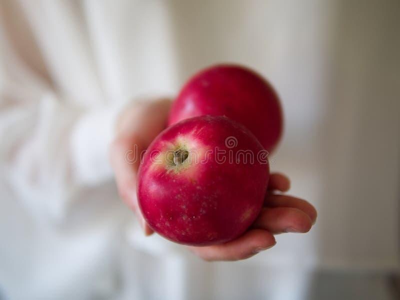 Женская рука держа 2 красных яблока стоковая фотография rf