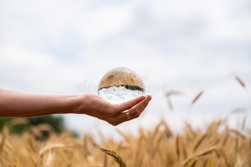 Женская рука держа хрустальный шар над зрея ушами пшеницы стоковая фотография
