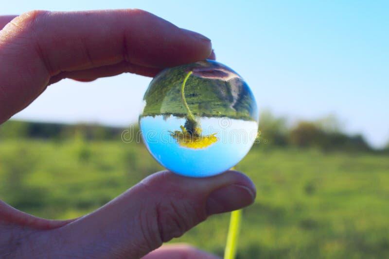 Женская рука держа Outdoors стеклянного шарика Желтое отражение одуванчика в стеклянном шарике Абстрактная предпосылка природы стоковые фото