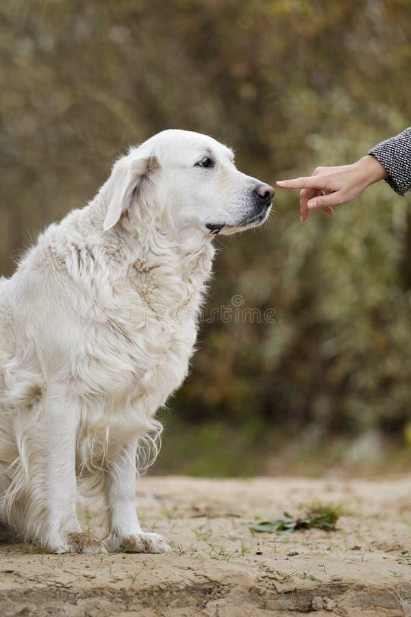 Женская рука patting голова собаки стоковые изображения
