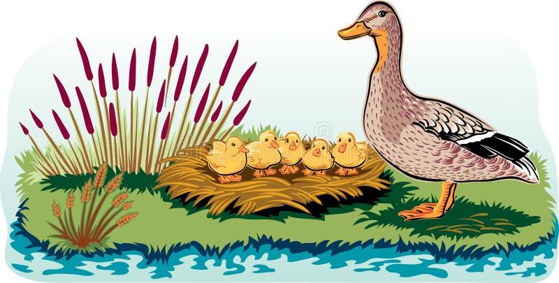 Женская утка с цыпленоками иллюстрация вектора