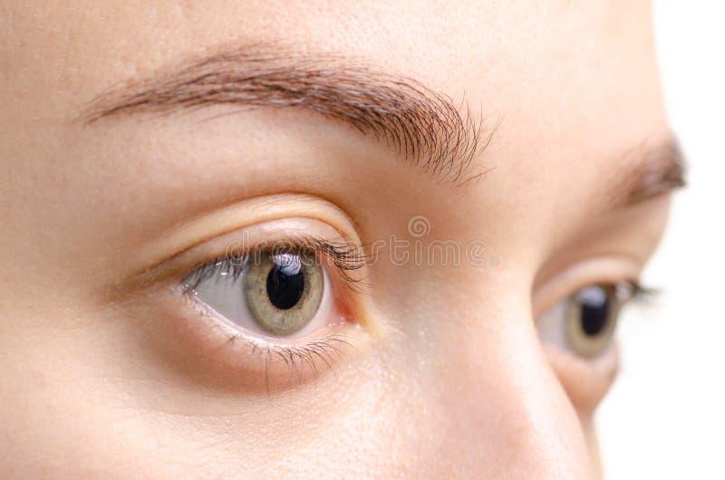 Женская форма взгляда глаза коричневого цвета бровей стоковые фото