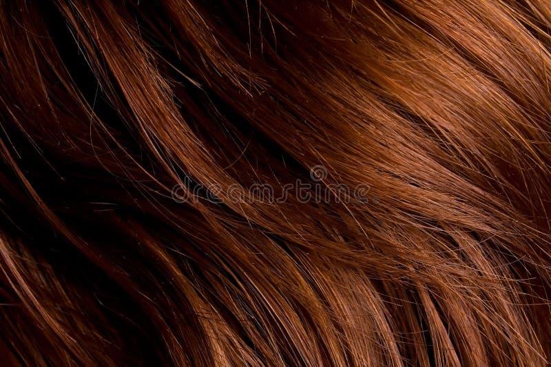 женские волосы стоковые фото
