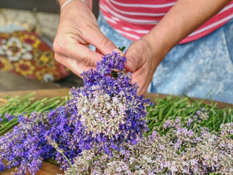 Женские руки держат ароматичные травяные черенок Француз Провансаль стоковые фото