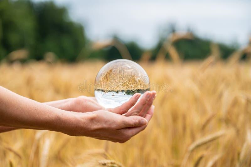 Женские руки держа кристаллическую сферу над пшеничным полем стоковые изображения rf