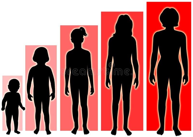 женские этапы роста иллюстрация вектора