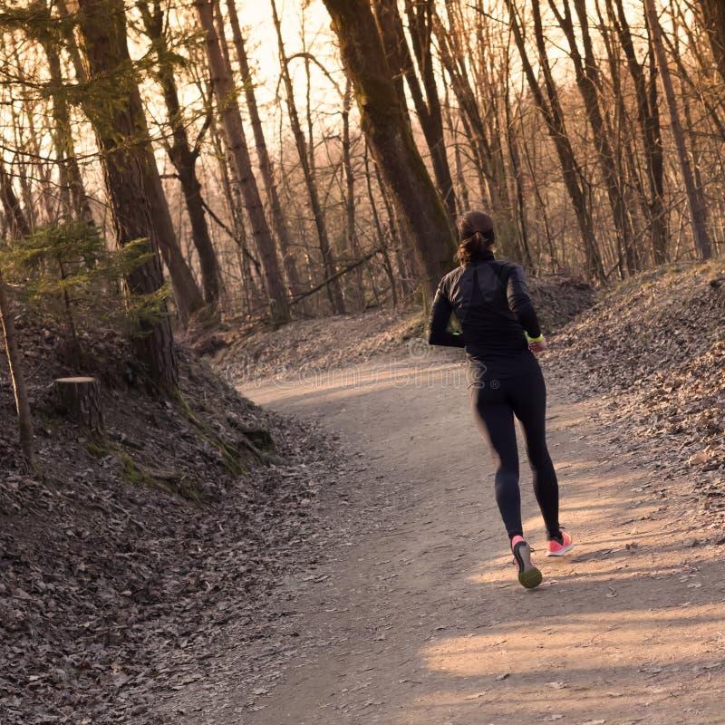 Женский бегун в лесе стоковые изображения rf