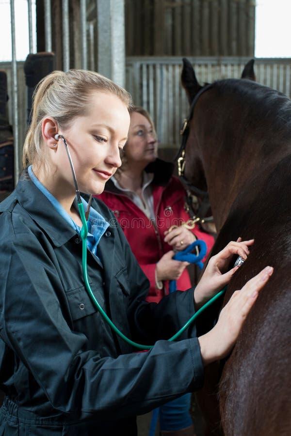 Женский ветеринар давая медицинское обследование к лошади в конюшне стоковая фотография rf